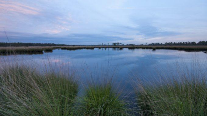 De Kalmthoutse Heide verkend….. en fotografisch vastgelegd!