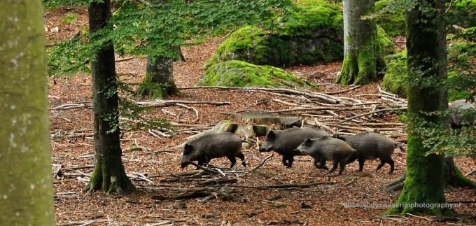 "Beierse Woud: Europees ""wild"" fotograferen zonder camouflagenet om je kop"