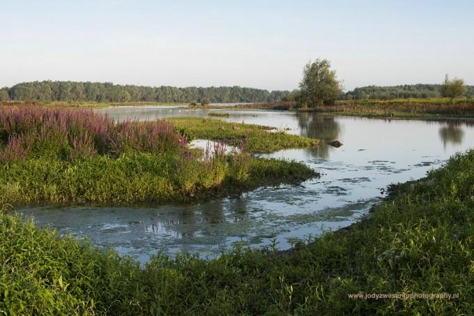 Fotosafari langs de Maas