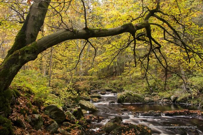 Ardennen en herfstfotografie op herhaling
