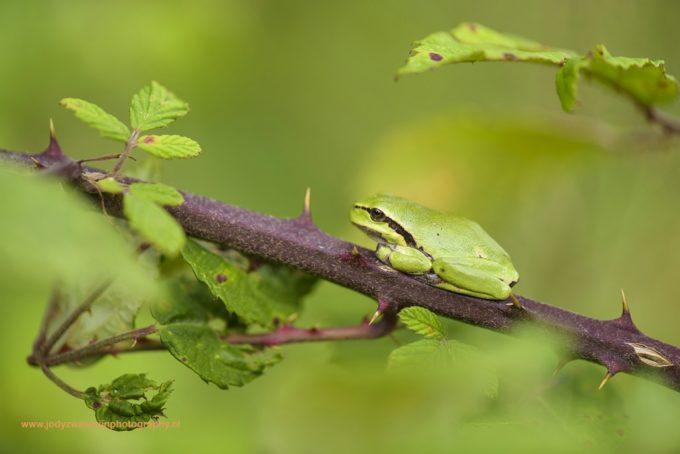 Boomkikkers: mooi groen is niet lelijk!