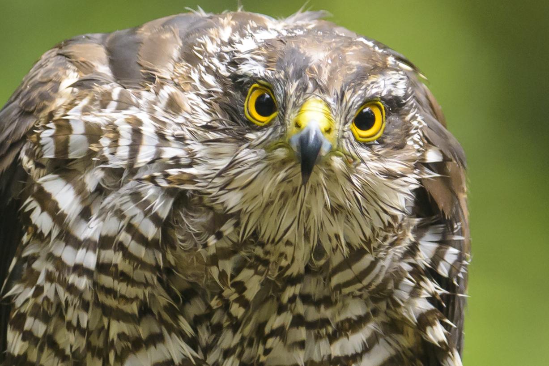 Vogelaar, vogelfotograaf of gewoon mooie plaatjes schieten?!