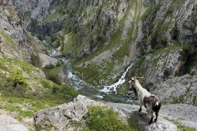 Wandelen en fotograferen in de Spaanse Picos de Europa