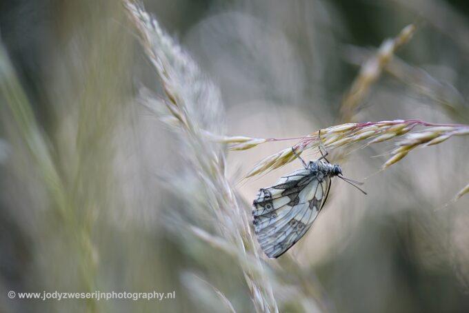 Vlinder locaties in Viroinval