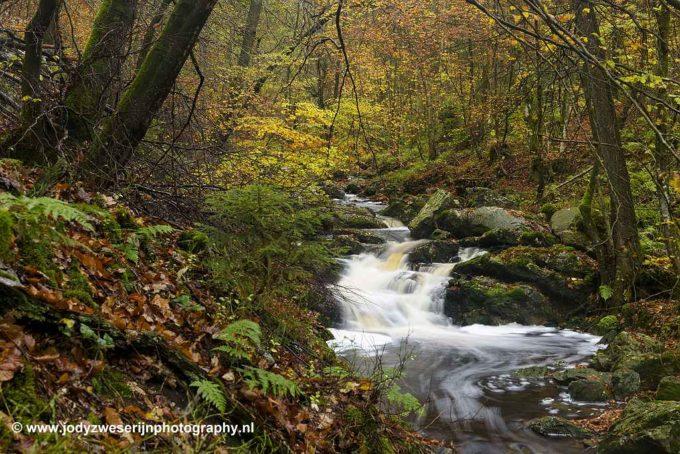Op zoek naar herfstkleuren in de Ardennen
